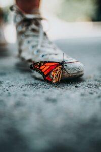 orange butterfly on white sneaker